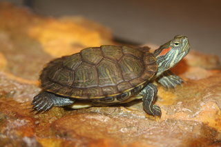 Is a Turtle Right for You?