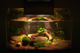 How to Find the Best Aquarium Tank for Your Turtle